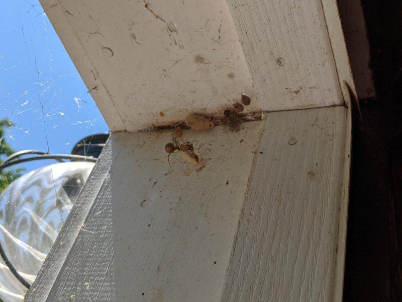 Today's #edu522 #dailychallenge Spider Captureng Moth #digped #openpedagogy #edtechchat